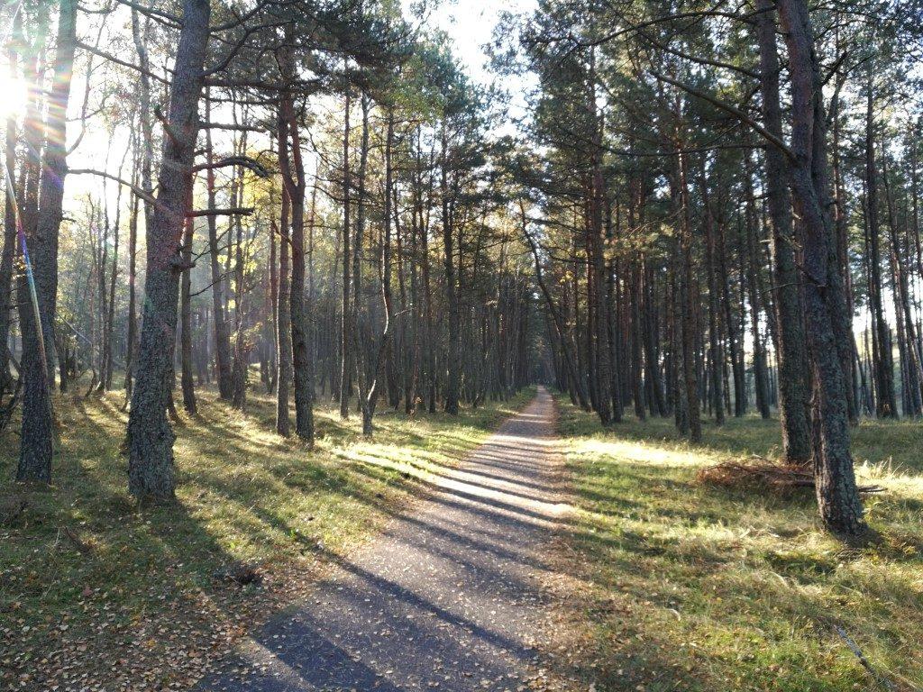 La forêt de l'Isthme de Courlande depuis le chemin aménagé pour les piétons et les vélos