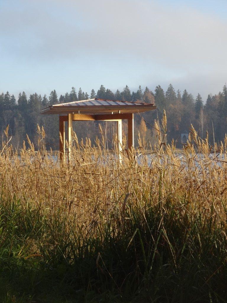 Les herbes hautes en bordure du lac