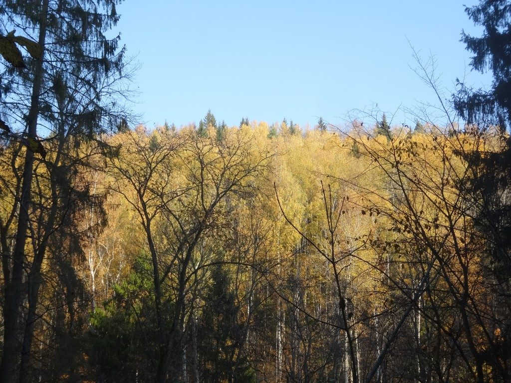 Le parc national de Gauja à l'automne