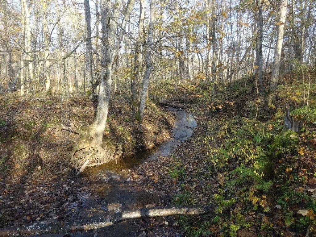 Un des ruisseaux qui alimentent la rivière Gauja