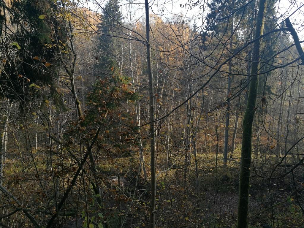 Le parc national Gauja à l'automne