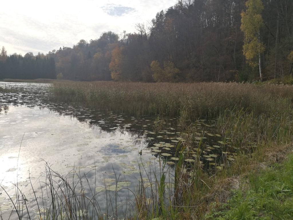 Une étendue d'eau dans le parc national Gauja