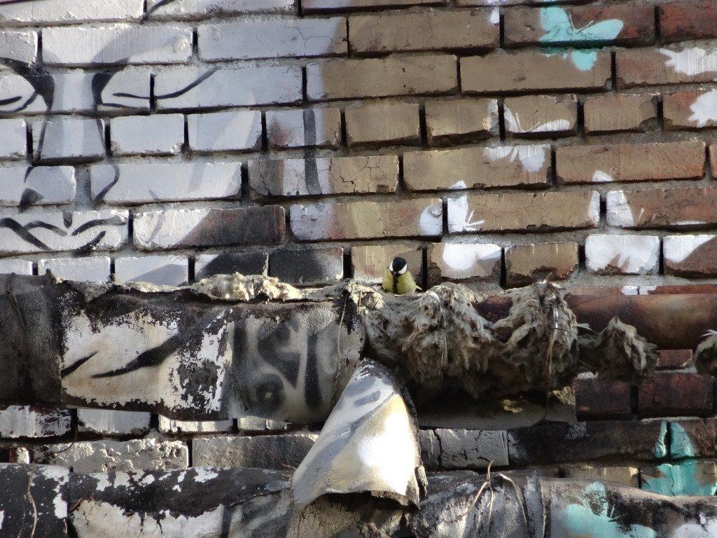 Des nids d'oiseaux au milieu des tags dans la ville