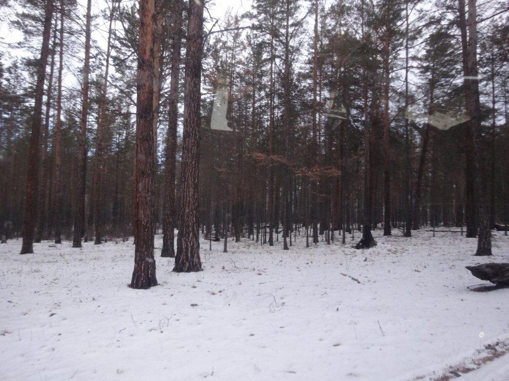 La neige dans la forêt de l'île d'Olkhon