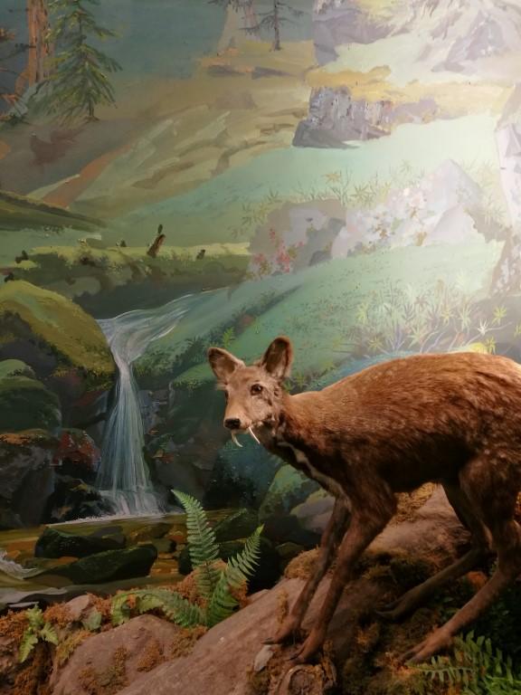 Dans le muséum d'histoire naturelle de Khabarovsk