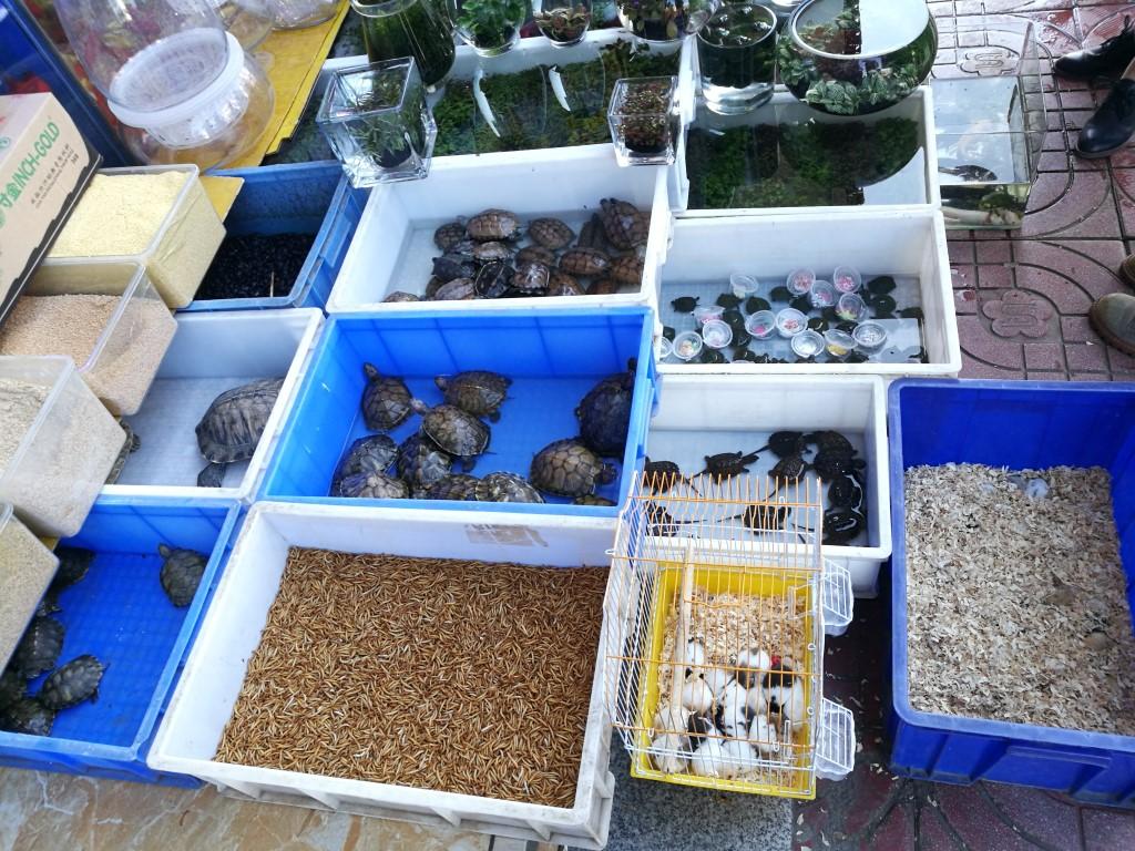Le marché aux animaux domestiques