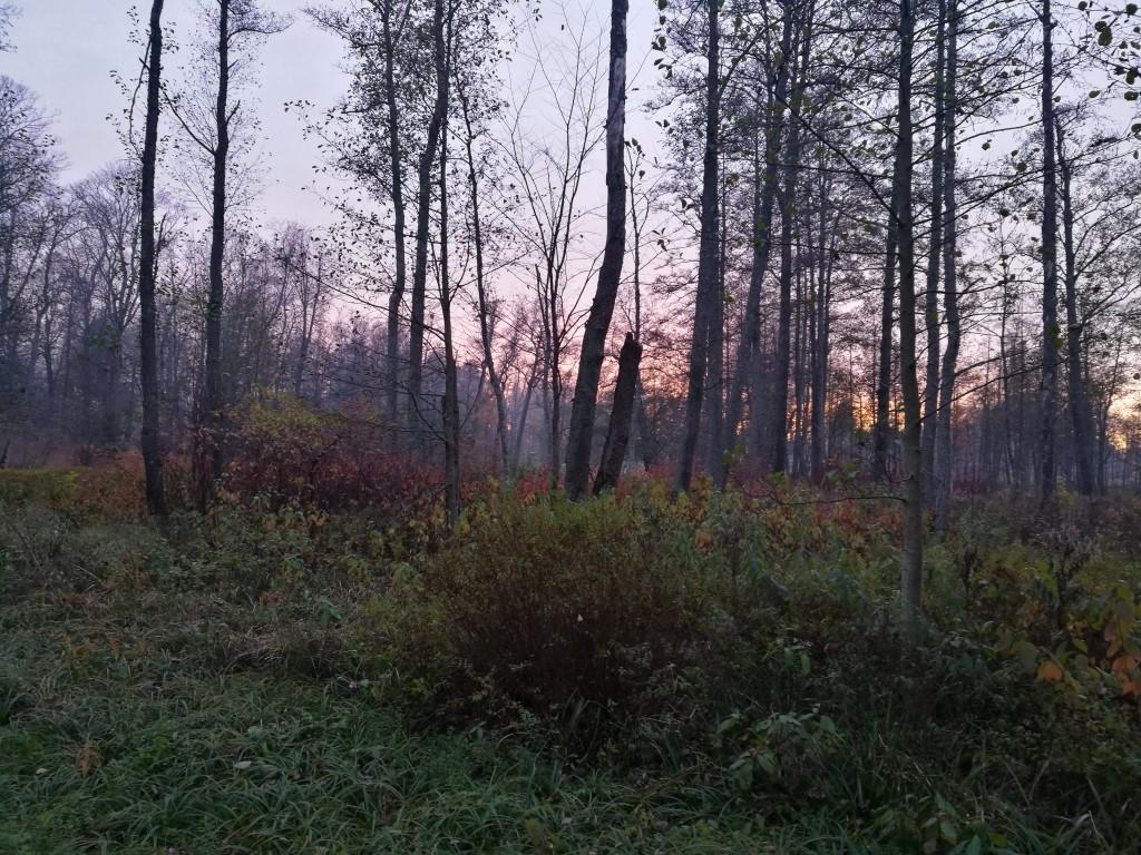 Coucher de soleil sur la forêt en bordure du lac