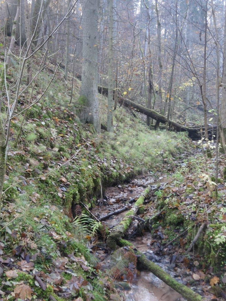Un des ruisseaux du parc national Gauja